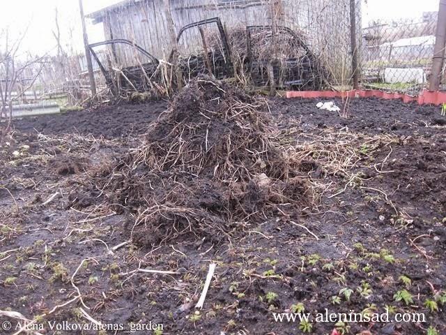 аленин сад, aleninsad, целина, весна, сныть, вьюнок, сорняки, борьба с сорняками, куча корней сныти