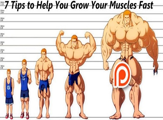 7 Tips to Help You Grow Your Muscles Fast