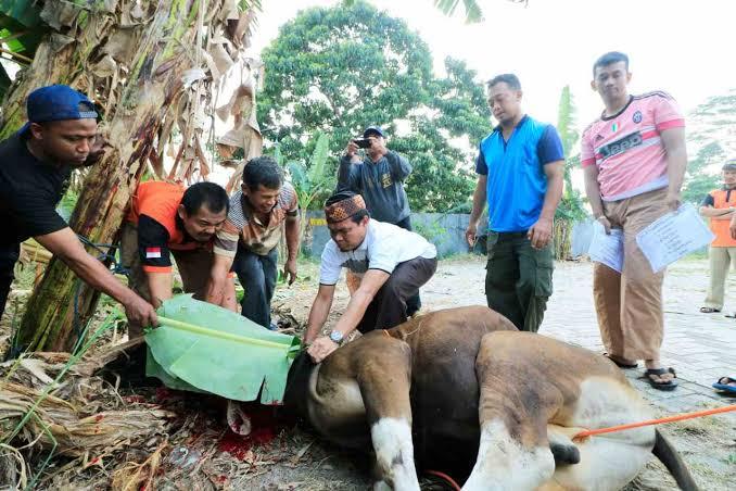 Muhammadiyah Fatwakan Tak Perlu Potong Hewan Kurban, Dana untuk Covid-19