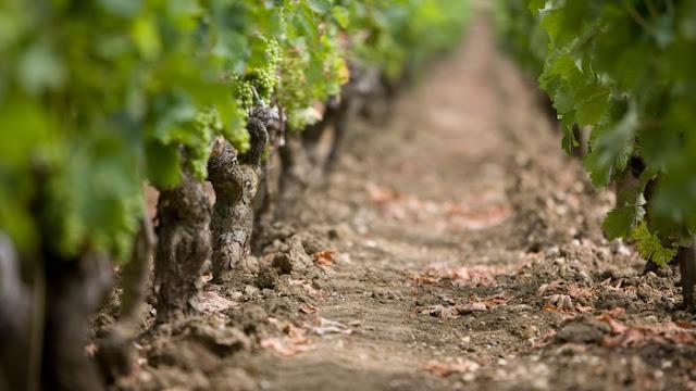 Roteiro do vinho em Bordeaux