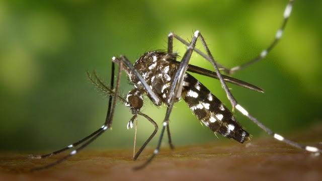 5 Cara Menghindari Gigitan Nyamuk