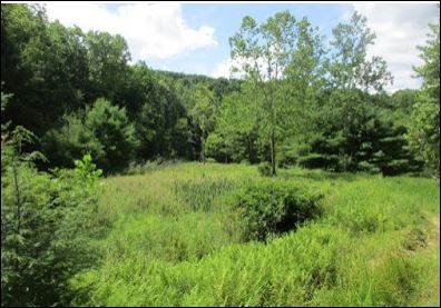 http://paenvironmentdaily.blogspot.com/2020/09/western-pa-conservancy-protects-561.html