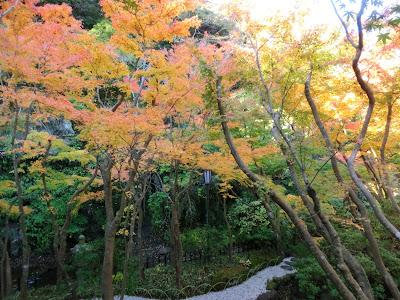 一条恵観山荘の紅葉