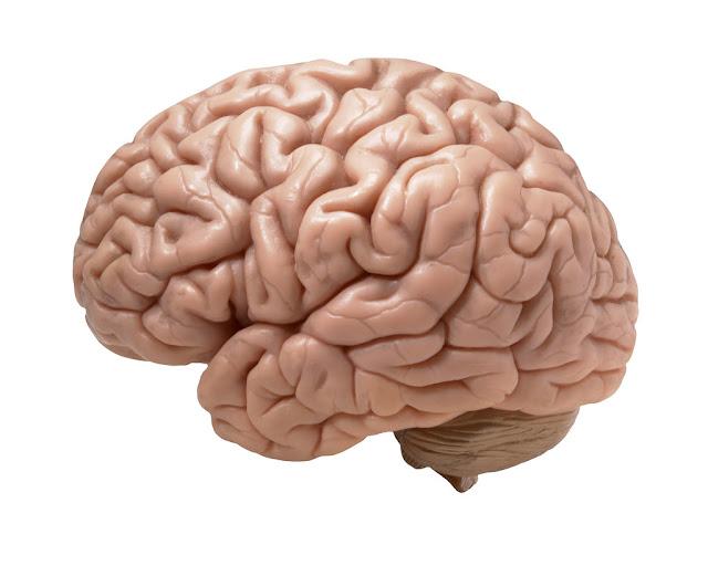 Fish eating to brain sharp