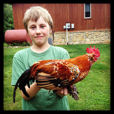 Kid holding a friendly rooster