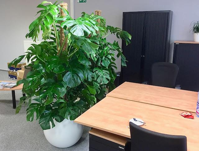 plantenverhuur in Limburg Vlaams-brabant Gent Brussel Antwerpen
