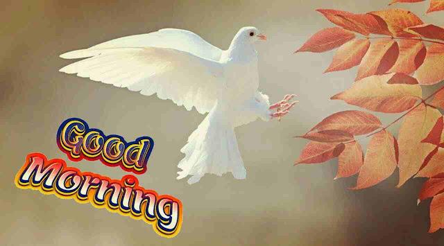 beautiful good morning image of cute white bird