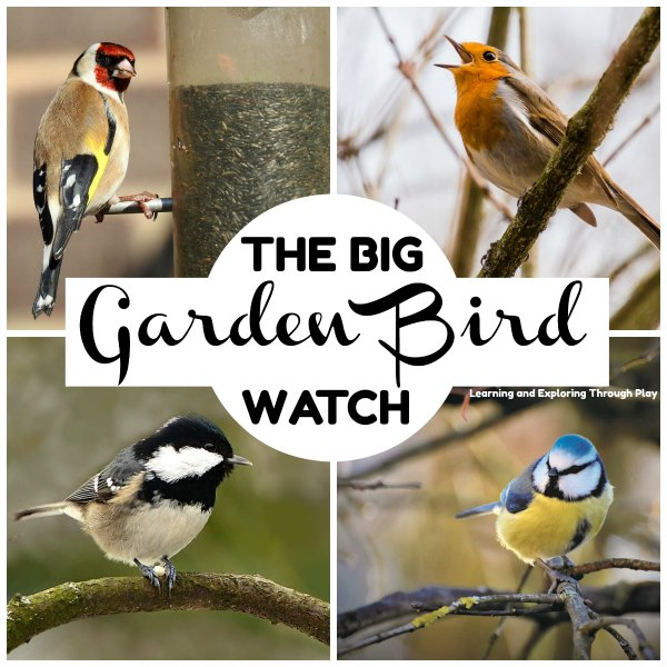 Big Garden Bird Watch 2020