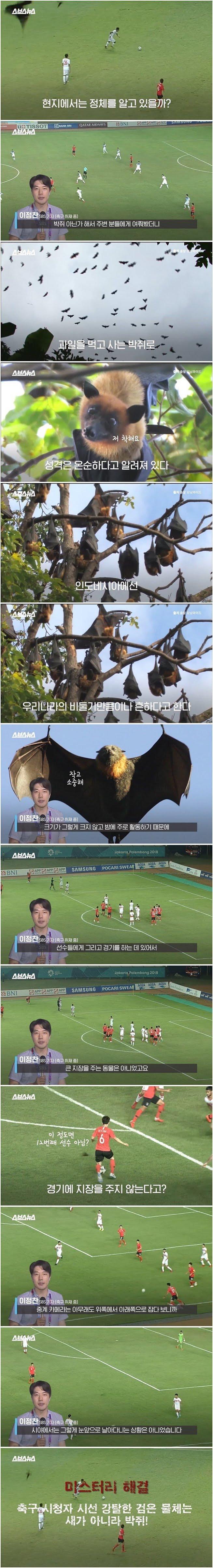 아시안게임 축구 화면 가리던 새들의 정체