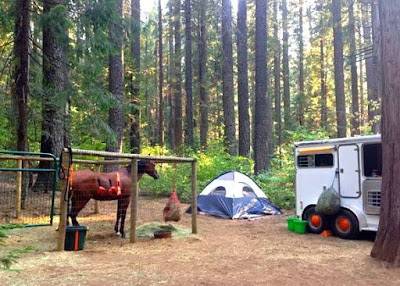 How to Go Horse Camping - Where to Keep Your Horse