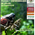 Libro en español gratis: Manejo integrado de plagas y enfermedades de Frijol