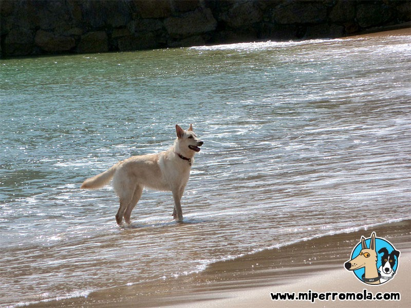 Can de Palleiro en la orilla de la playa