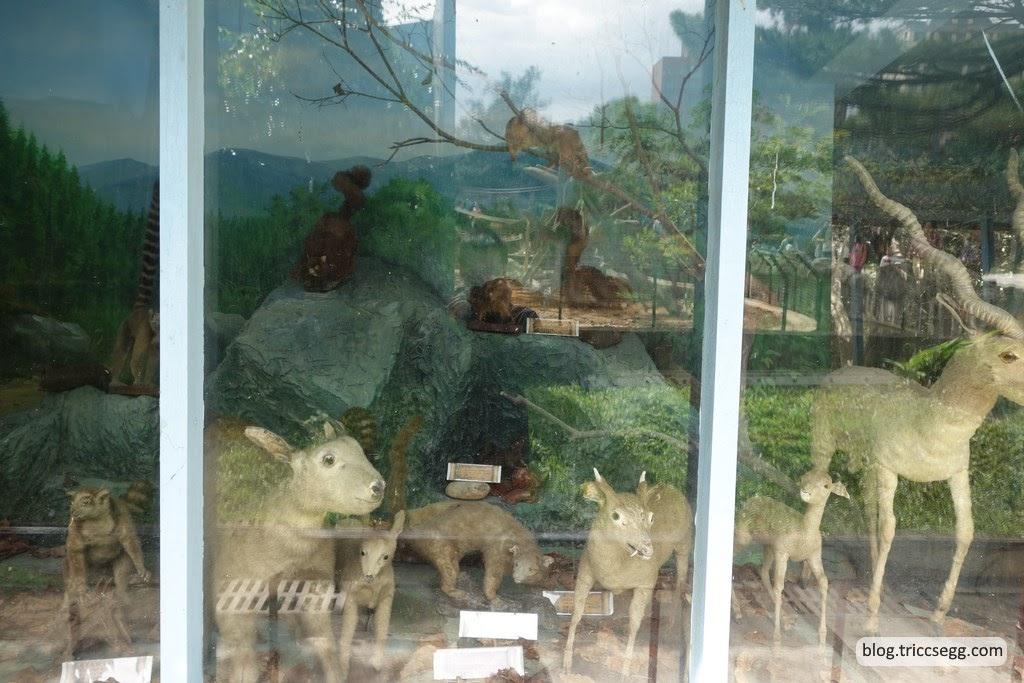 新竹市立動物園(28).JPG