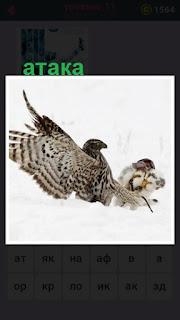 655 слов происходит атака птицы на снегу 11 уровень