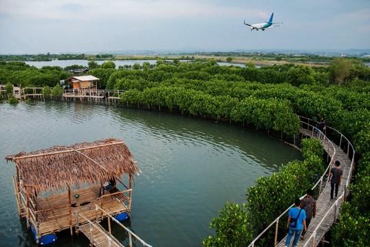 Pesona Pantai Maron Dengan Hutan Mangrovenya Di Semarang