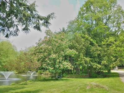 A relaxing setting at Drake Well Museum and Park with creek to the left, green grass, and trees on a sunny day