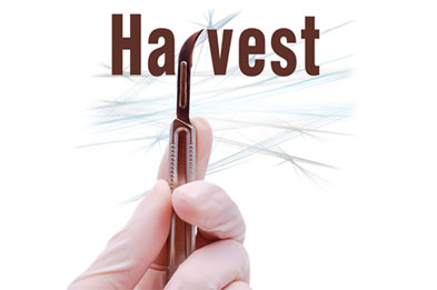 manjula padmanabhan harvest
