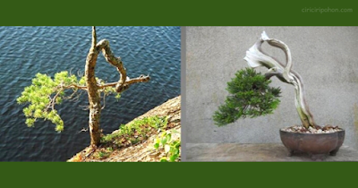 Bonsai Inspiration 2