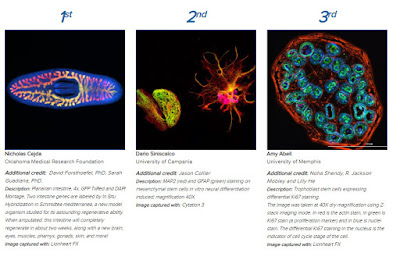 Imaging Perspectives 2018 Winners