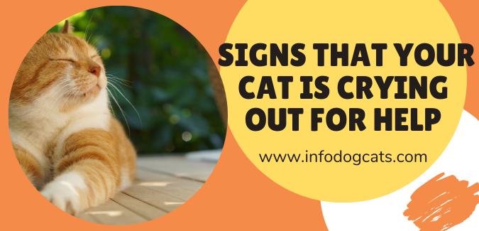 Signs that your cat is crying out for help