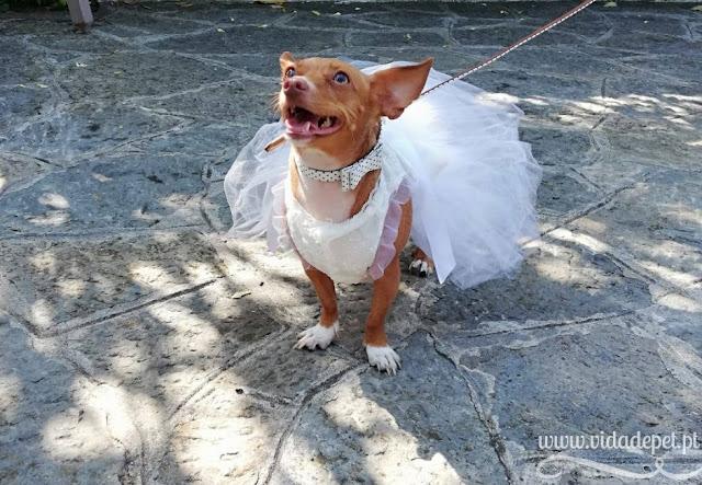 Animais num casamento + animais domésticos + cadela entrega as alianças + blogue português + vida de pet + animais de estimação