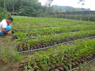 Pembelajaran Pertanian PP Shidiqiin Wara` Purwojati Banyumas