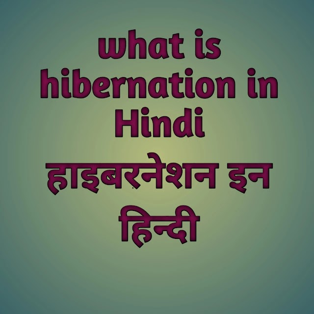 What is hibernation in animals in Hindi - hibernation kya hota hai | hibernation in hindi