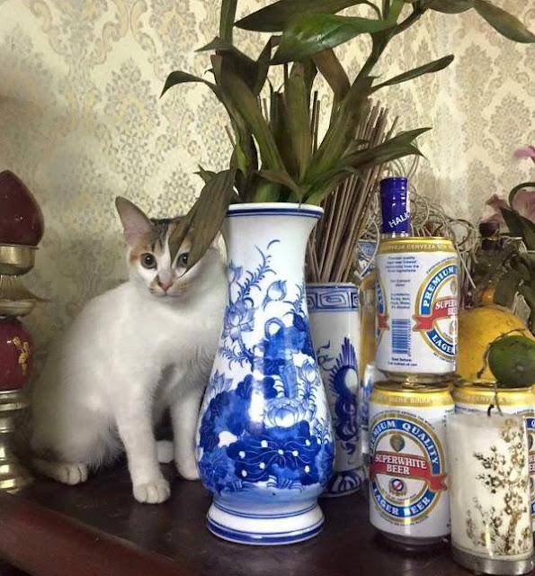 Tóm gọn 13 con mèo đang ngồi trên bàn thờ buôn hoa quả