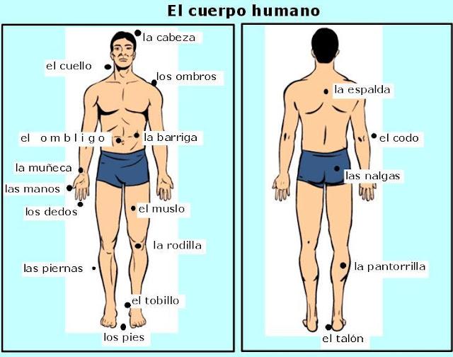 EJERCICIOS DE ESPAÑOL.: EXPRESIONES CON PARTES CUERPO HUMANO