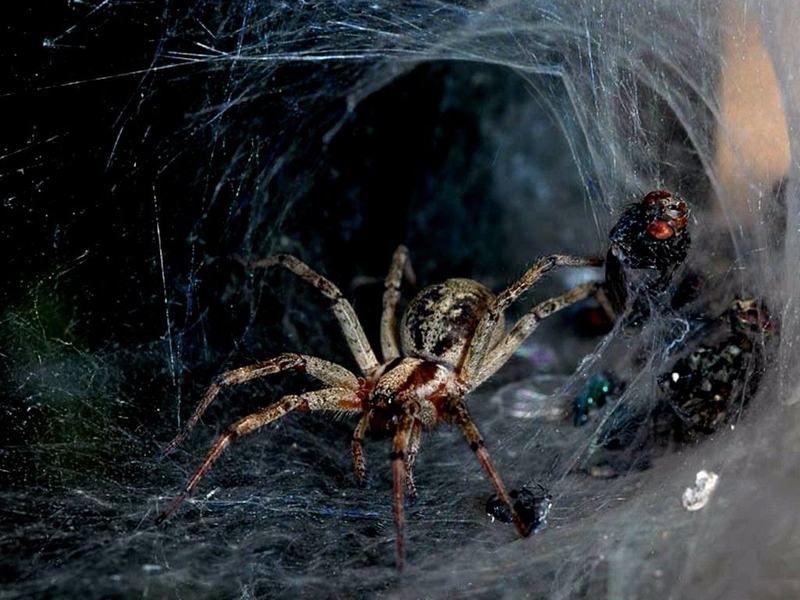 Herr Der Ringe Spinne