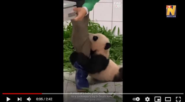 Το βίντεο ενός αξιολάτρευτου μωρού πάντα που έγινε viral (vid)