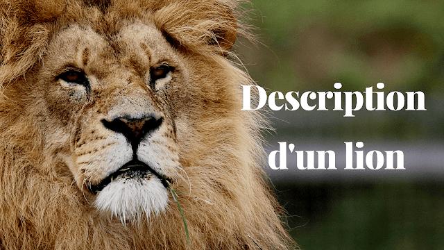 Production écrite : Description d'un lion