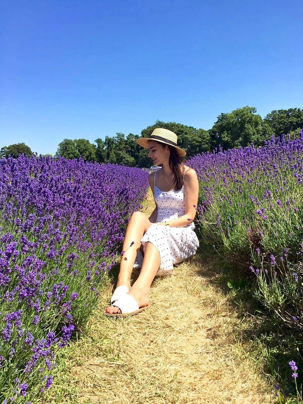 lavender fields london peexo blog