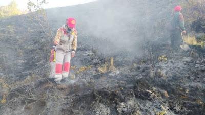 Bomberos y pobladores buscan controlar incendio forestal en Cusco