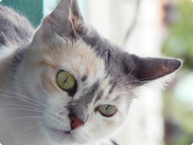 gatinha cherry, blog de casal, jell e marcelo, gato com instagram