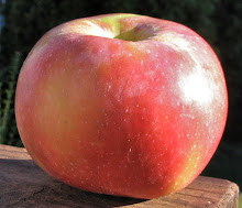 Local apple said to be Sweetango