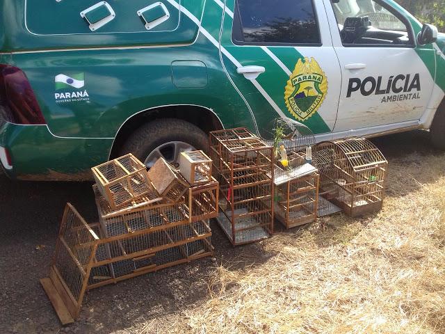 MAUÁ DA SERRA - Homem procurado pela Justiça por crime de homicídio é preso com cinco pássaros silvestres