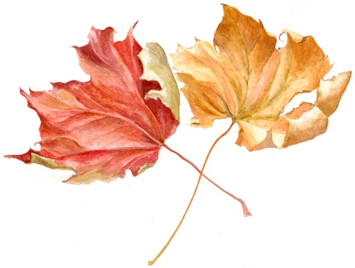 Autumn Lights Picture: Autumn Leaves Paintings