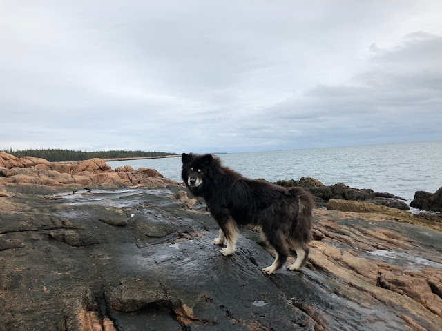 dog on the rocks on the ocean shore