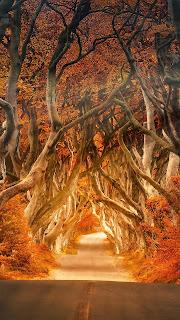 تحميل صور للخريف.