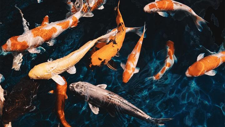 animal crossing fish
