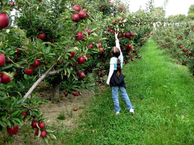 لغز الغابة السحرية وشجرة التفاح