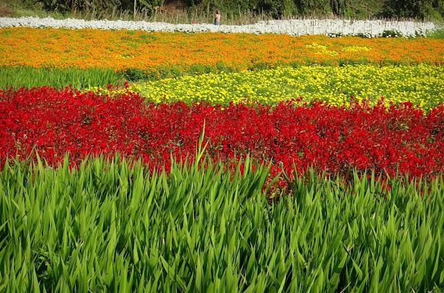 The Valley of Flowers: Khirai, Panskura, West Bengal