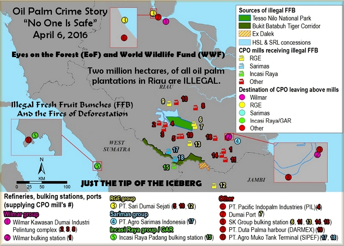illegal palm oil fresh fruit bunches and traceability