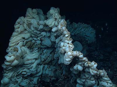 Large sea sponge