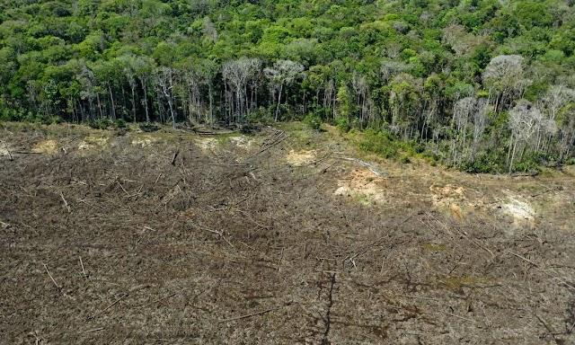 Desmatamento na Amazônia tem pior mês de março dos últimos dez anos