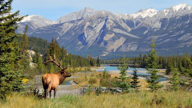 10 Canada Facts That Can Make You Interesting About The Country