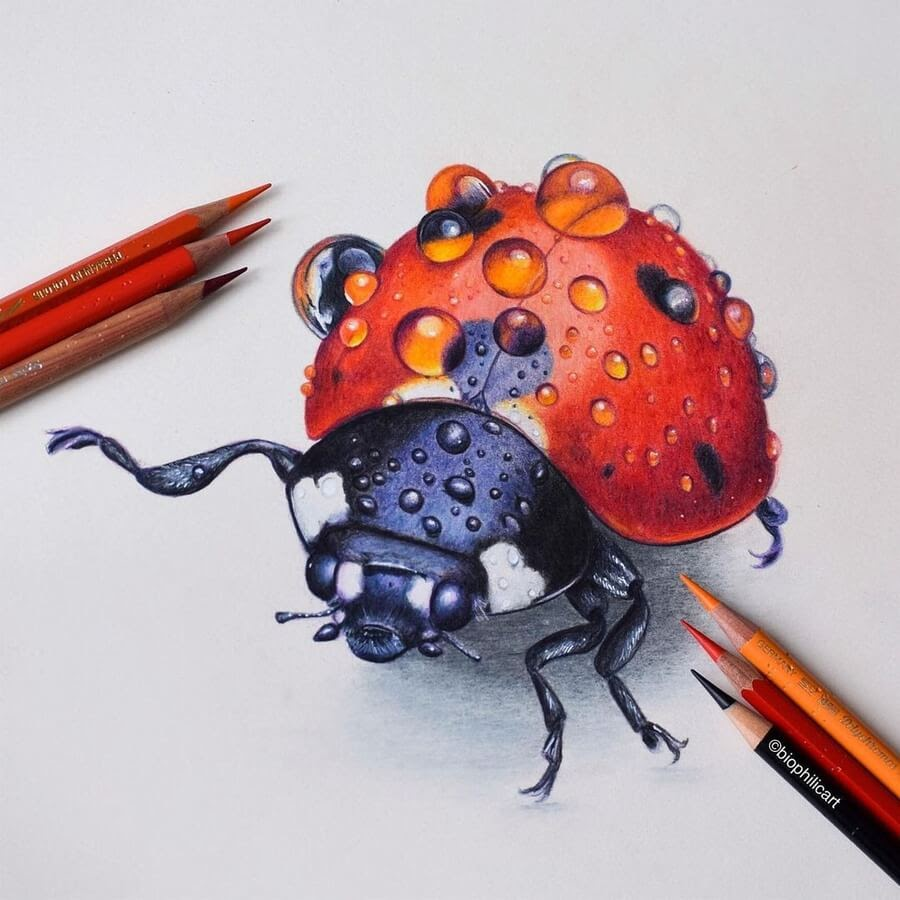 04-Ladybird-Sallyann-www-designstack-co