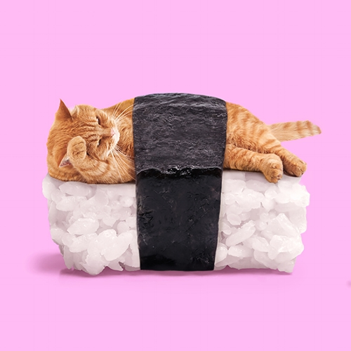 """Sushi cat"" por Paul Fuentes 
