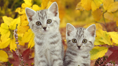 caty-lovely-wallpapers-imgs-pictures
